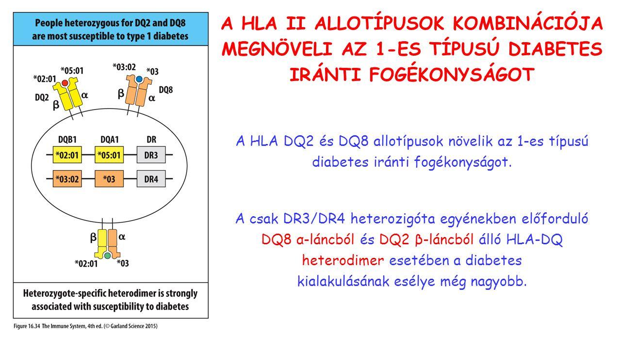 A HLA II ALLOTÍPUSOK KOMBINÁCIÓJA MEGNÖVELI AZ 1-ES TÍPUSÚ DIABETES IRÁNTI FOGÉKONYSÁGOT A HLA DQ2 és DQ8 allotípusok növelik az 1-es típusú diabetes iránti fogékonyságot.