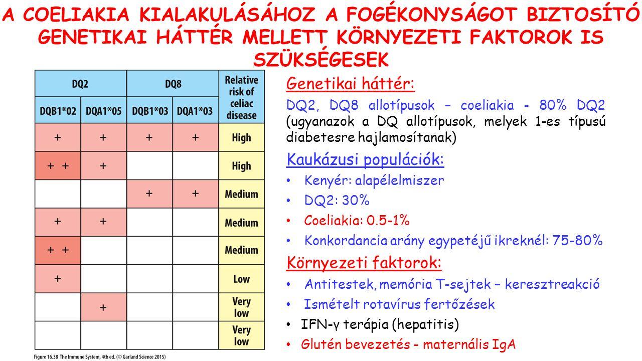 Genetikai háttér: DQ2, DQ8 allotípusok – coeliakia - 80% DQ2 (ugyanazok a DQ allotípusok, melyek 1-es típusú diabetesre hajlamosítanak) Kaukázusi populációk: Kenyér: alapélelmiszer DQ2: 30% Coeliakia: 0.5-1% Konkordancia arány egypetéjű ikreknél: 75-80% Környezeti faktorok: Antitestek, memória T-sejtek – keresztreakció Ismételt rotavírus fertőzések IFN-γ terápia (hepatitis) Glutén bevezetés - maternális IgA A COELIAKIA KIALAKULÁSÁHOZ A FOGÉKONYSÁGOT BIZTOSÍTÓ GENETIKAI HÁTTÉR MELLETT KÖRNYEZETI FAKTOROK IS SZÜKSÉGESEK