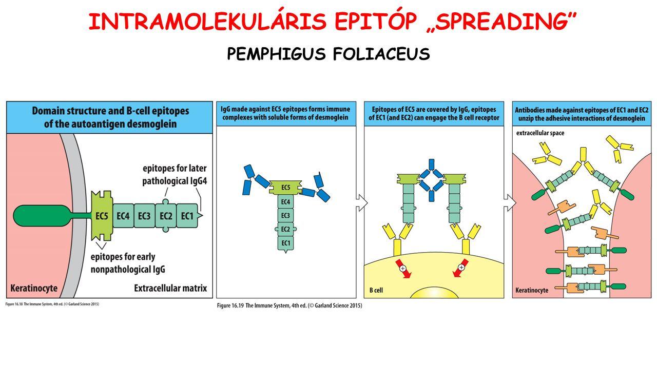 "PEMPHIGUS FOLIACEUS INTRAMOLEKULÁRIS EPITÓP ""SPREADING"""