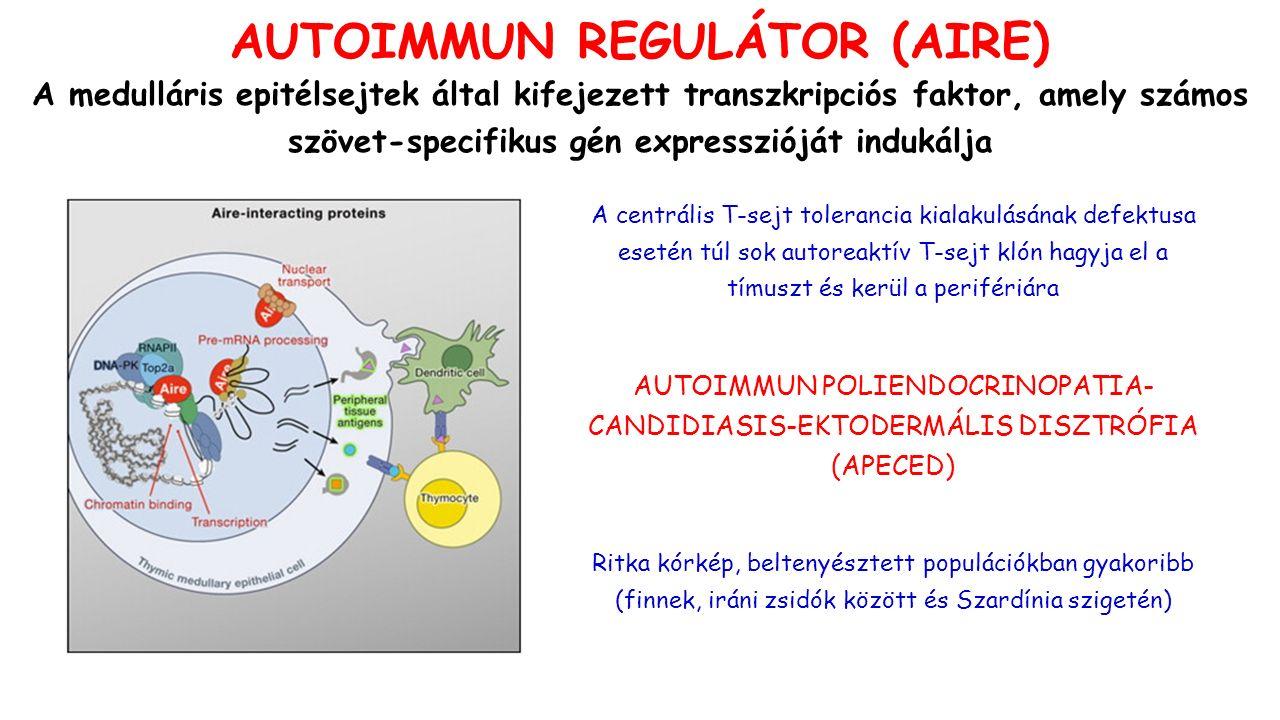 FOXP3 deficiencia: IPEX ) Psoriasis: IL-6-mediált rezisztencia Keratoconjunctivitis sicca (száraz szem): kvalitatív Treg defekt - rezisztens Th17 effektor sejtek CTLA-4 haploinsufficiencia: autoimmunitás IL-10: súlyos colitis doi:10.1038/nri2889 AZ AUTOREAKTÍV T-SEJTEK FÖLÖTTI KONTROLL ELVESZTÉSE AUTOIMMUNITÁSHOZ VEZET