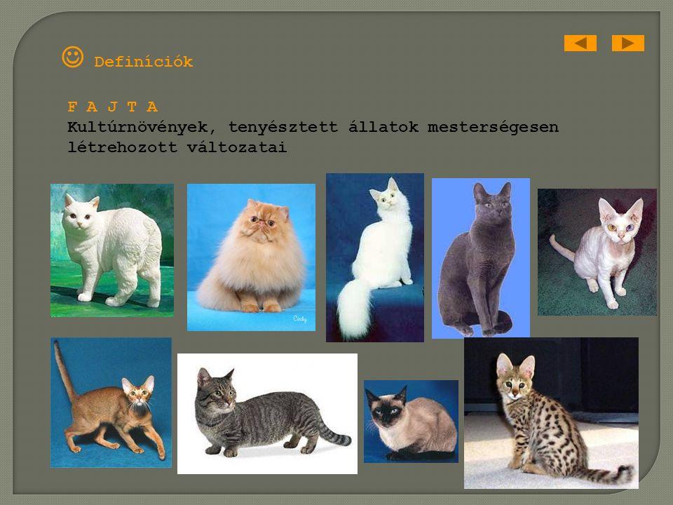 Definíciók A L F A J A fajtól fenotípusában és élőhelyében tér el, szapororodásában azonban még nem szigetelődött el Neve 3 szóból áll pl: Equus cabal