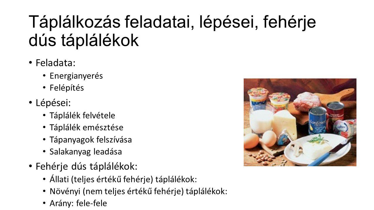 Táplálkozás feladatai, lépései, fehérje dús táplálékok Feladata: Energianyerés Felépítés Lépései: Táplálék felvétele Táplálék emésztése Tápanyagok felszívása Salakanyag leadása Fehérje dús táplálékok: Állati (teljes értékű fehérje) táplálékok: Növényi (nem teljes értékű fehérje) táplálékok: Arány: fele-fele