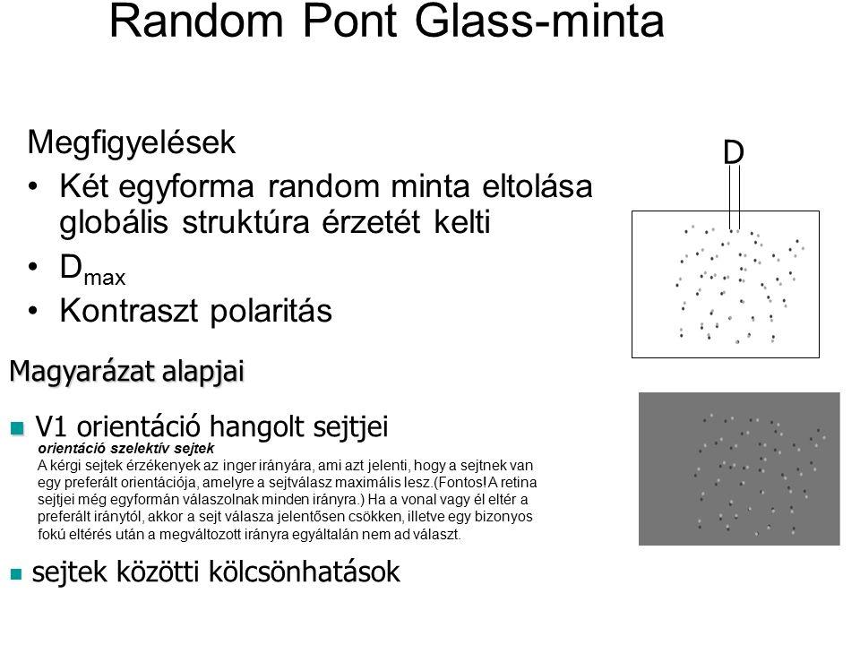 Random Pont Glass-minta Megfigyelések Két egyforma random minta eltolása globális struktúra érzetét kelti D max Kontraszt polaritás Magyarázat alapjai V1 orientáció hangolt sejtjei sejtek közötti kölcsönhatások D orientáció szelektív sejtek A kérgi sejtek érzékenyek az inger irányára, ami azt jelenti, hogy a sejtnek van egy preferált orientációja, amelyre a sejtválasz maximális lesz.(Fontos.