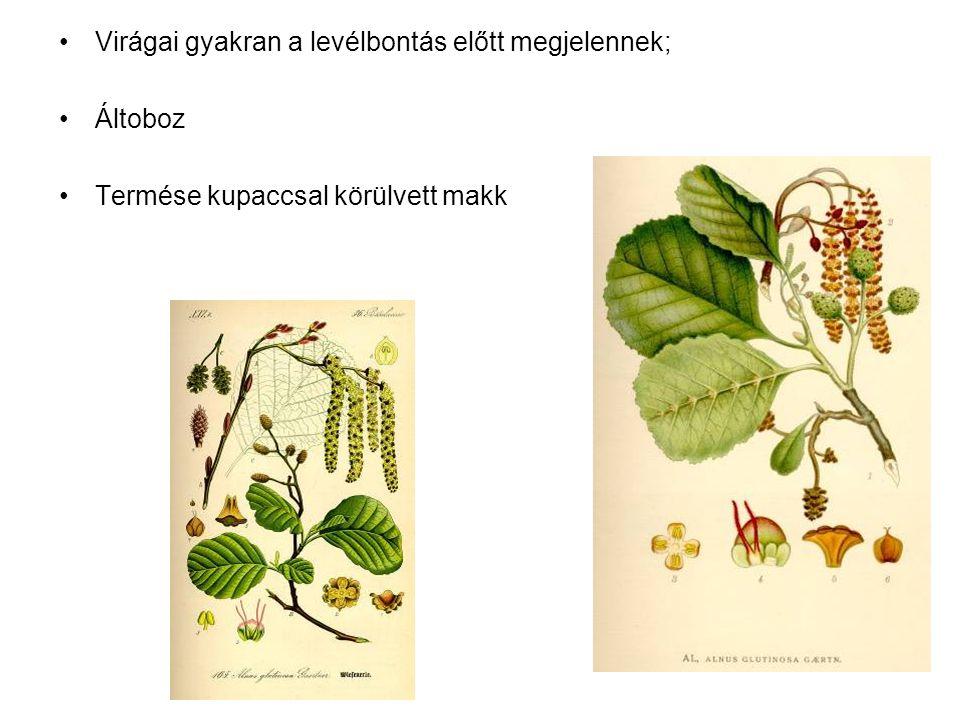 Virágai gyakran a levélbontás előtt megjelennek; Áltoboz Termése kupaccsal körülvett makk