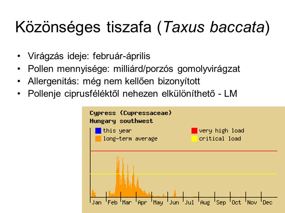 Virágzás ideje: február-április Pollen mennyisége: milliárd/porzós gomolyvirágzat Allergenitás: még nem kellően bizonyított Pollenje ciprusféléktől ne