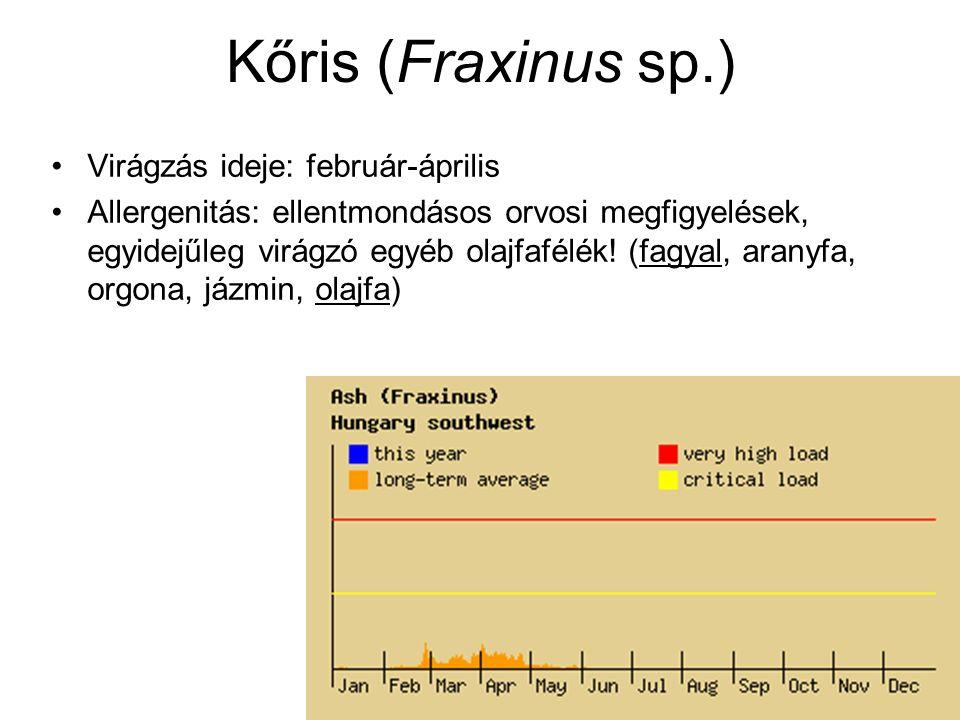 Kőris (Fraxinus sp.) Virágzás ideje: február-április Allergenitás: ellentmondásos orvosi megfigyelések, egyidejűleg virágzó egyéb olajfafélék! (fagyal