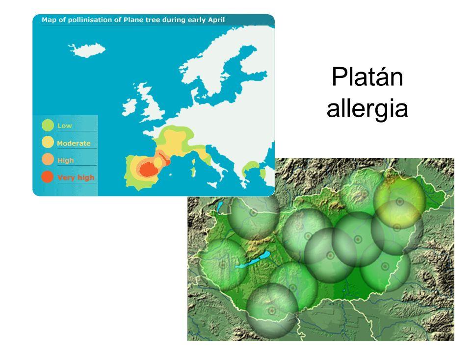Platán allergia
