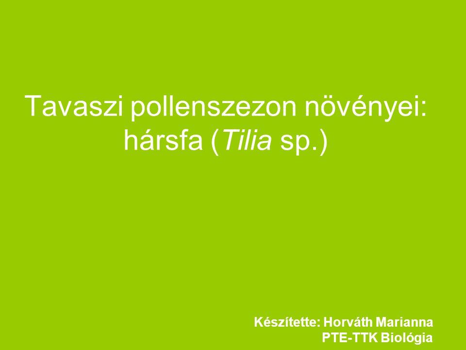 Tavaszi pollenszezon növényei: hársfa (Tilia sp.) Készítette: Horváth Marianna PTE-TTK Biológia
