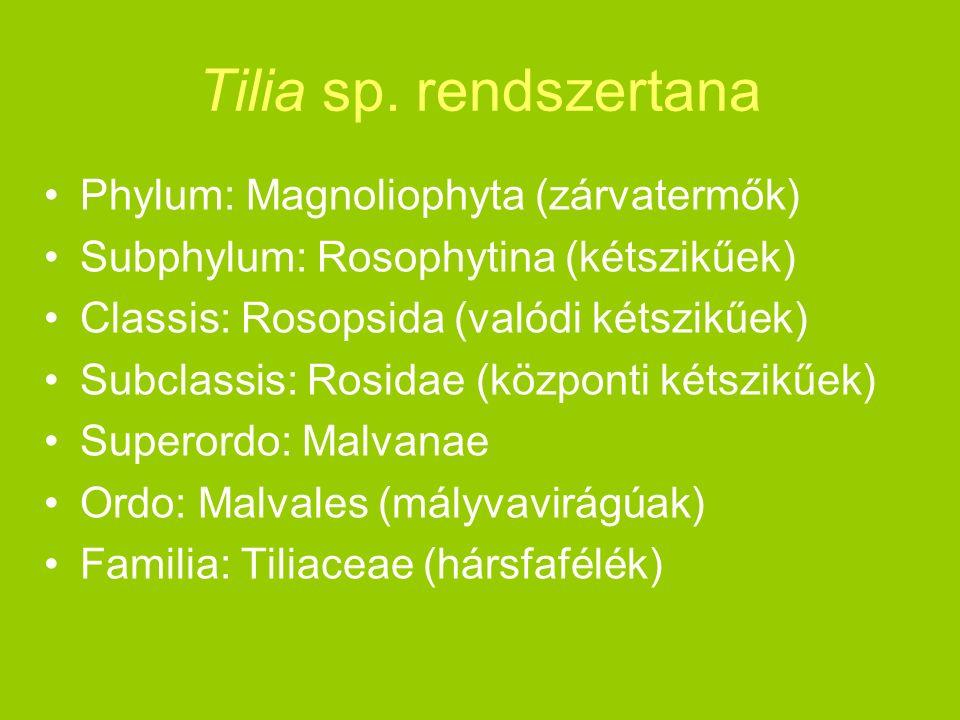 Tilia sp. rendszertana Phylum: Magnoliophyta (zárvatermők) Subphylum: Rosophytina (kétszikűek) Classis: Rosopsida (valódi kétszikűek) Subclassis: Rosi