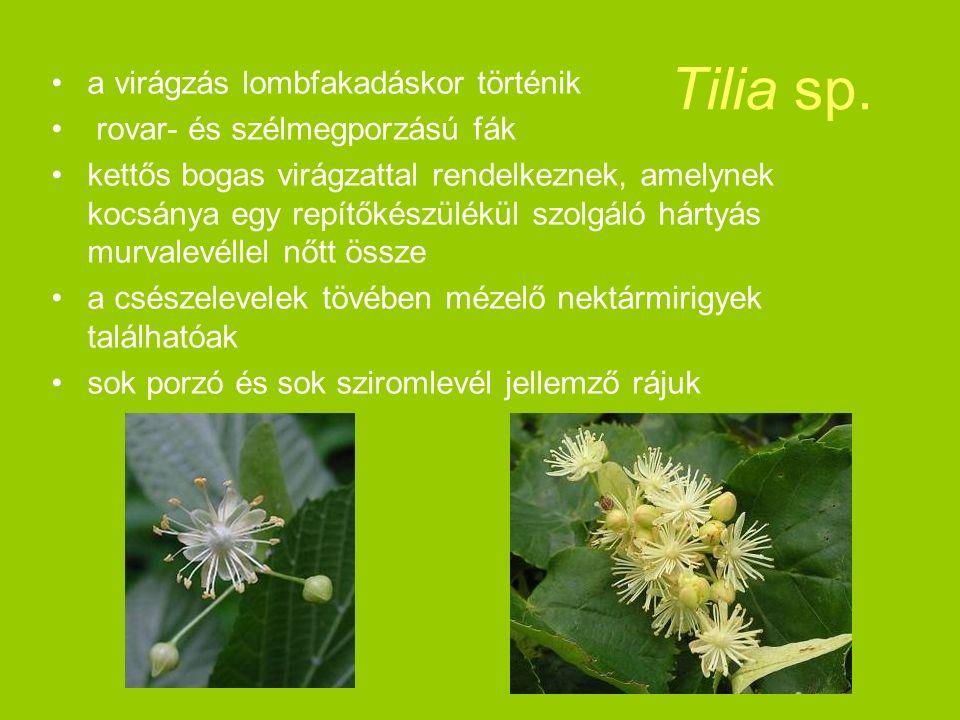 a virágzás lombfakadáskor történik rovar- és szélmegporzású fák kettős bogas virágzattal rendelkeznek, amelynek kocsánya egy repítőkészülékül szolgáló