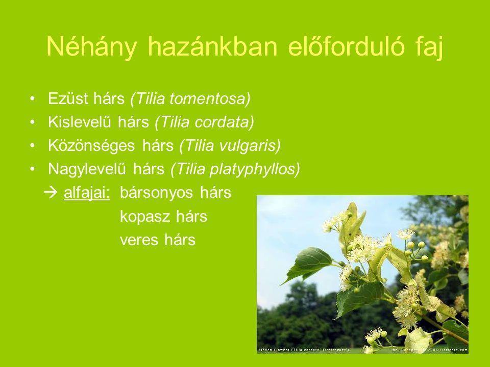 Néhány hazánkban előforduló faj Ezüst hárs (Tilia tomentosa) Kislevelű hárs (Tilia cordata) Közönséges hárs (Tilia vulgaris) Nagylevelű hárs (Tilia pl