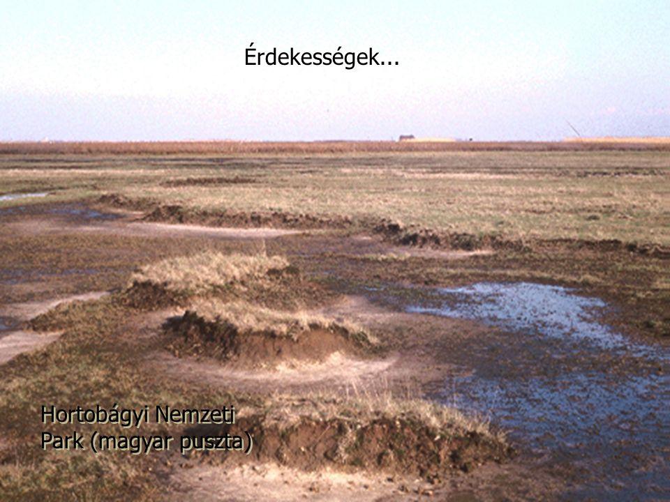 Érdekességek... Hortobágyi Nemzeti Park (magyar puszta)