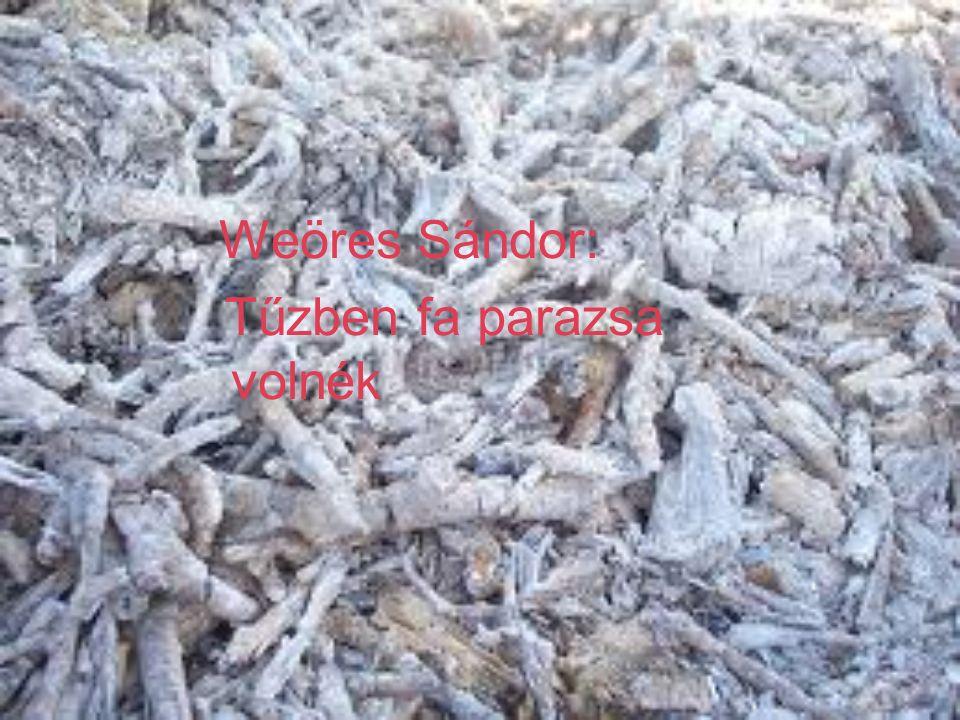 Weöres Sándor: Tűzben fa parazsa volnék