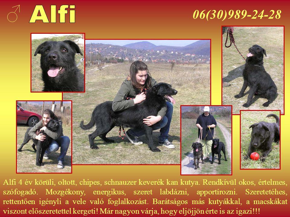 06(30)989-24-28 Maci 1-2 éves, kis-közepes méretű, ivartalanított szuka kutya.