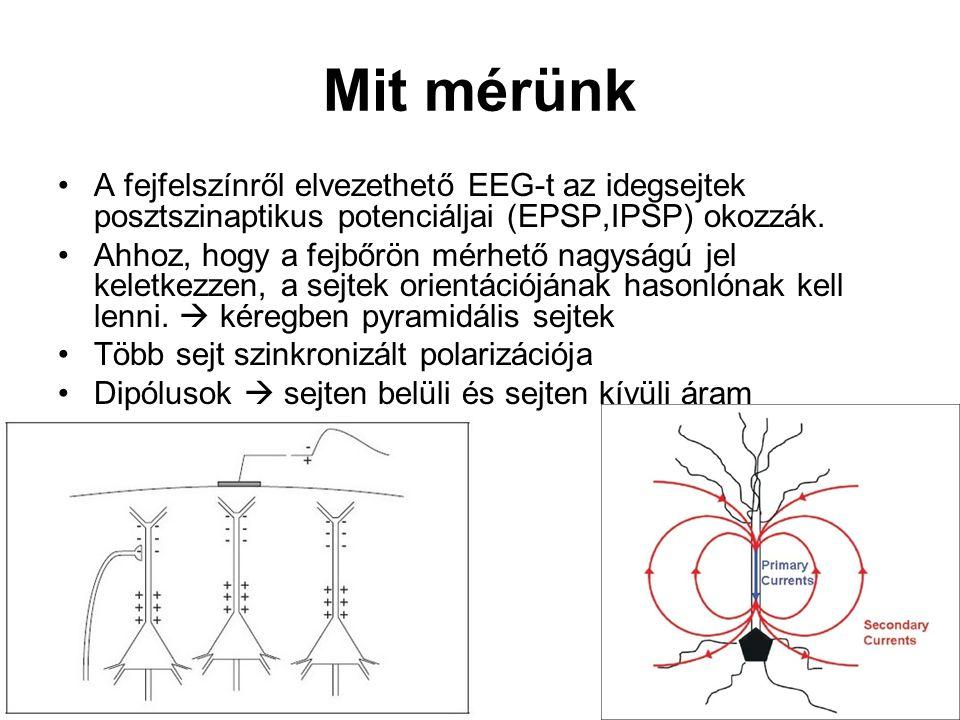 Mit mérünk A fejfelszínről elvezethető EEG-t az idegsejtek posztszinaptikus potenciáljai (EPSP,IPSP) okozzák. Ahhoz, hogy a fejbőrön mérhető nagyságú