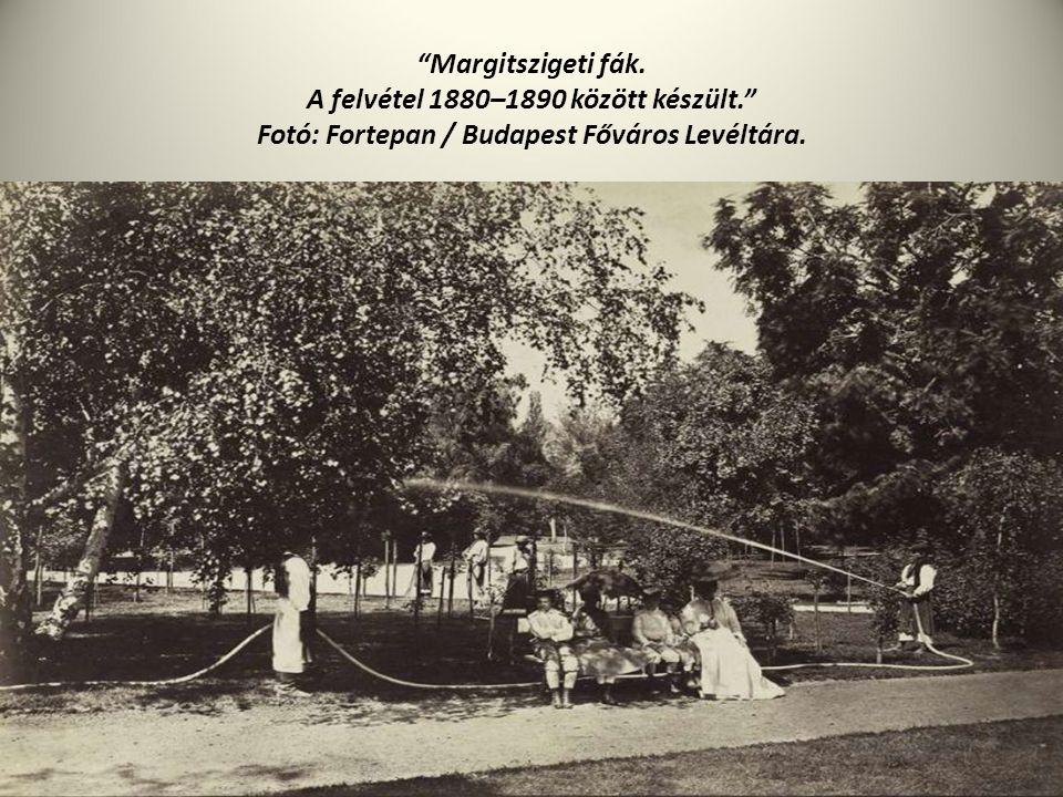 """""""Margitszigeti fák. A felvétel 1880–1890 között készült."""" Fotó: Fortepan / Budapest Főváros Levéltára."""