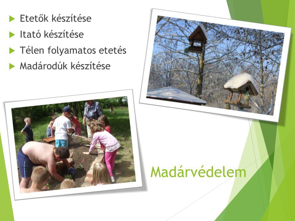 Madárvédelem  Etetők készítése  Itató készítése  Télen folyamatos etetés  Madárodúk készítése