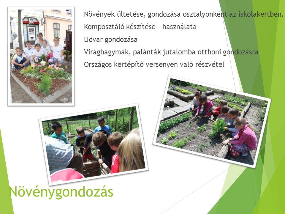 Növénygondozás Növények ültetése, gondozása osztályonként az iskolakertben.