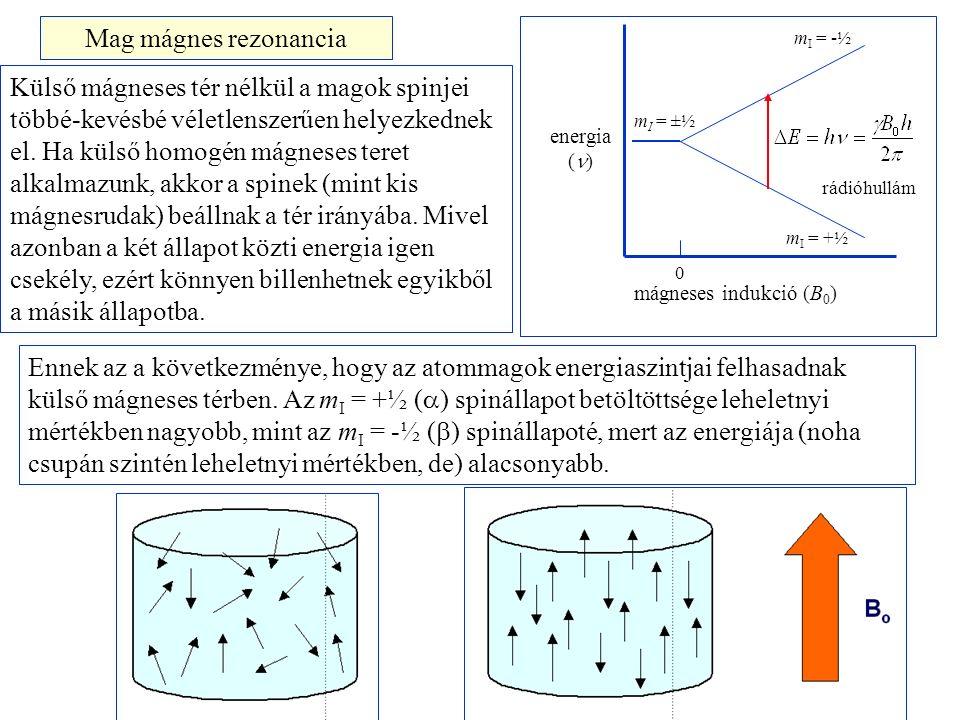 energia ( ) mágneses indukció (B 0 ) 0 m I = ±½ m I = -½ m I = +½ Mag mágnes rezonancia Külső mágneses tér nélkül a magok spinjei többé-kevésbé véletlenszerűen helyezkednek el.