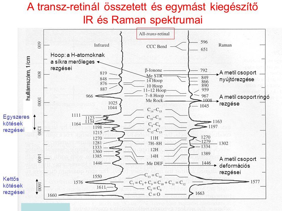 A transz-retinál összetett és egymást kiegészítő IR és Raman spektrumai hullámszám, 1/cm A metil csoport nyújtórezgése A metil csoport ringó rezgése A metil csoport deformációs rezgései Hoop: a H-atomoknak a síkra merőleges rezgései Kettős kötések rezgései Egyszeres kötések rezgései