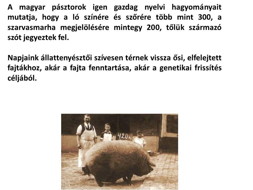 A magyar pásztorok igen gazdag nyelvi hagyományait mutatja, hogy a ló színére és szőrére több mint 300, a szarvasmarha megjelölésére mintegy 200, tőlük származó szót jegyeztek fel.