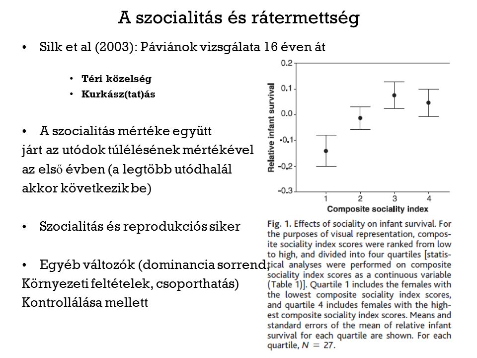 A szocialitás és rátermettség Silk et al (2003): Páviánok vizsgálata 16 éven át Téri közelség Kurkász(tat)ás A szocialitás mértéke együtt járt az utódok túlélésének mértékével az els ő évben (a legtöbb utódhalál akkor következik be) Szocialitás és reprodukciós siker Egyéb változók (dominancia sorrend, Környezeti feltételek, csoporthatás) Kontrollálása mellett