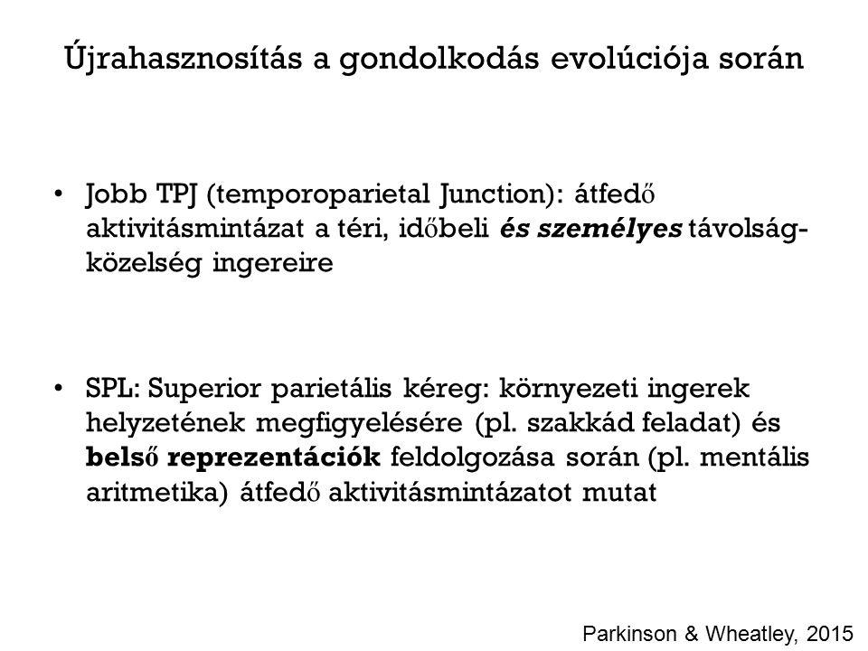 Újrahasznosítás a gondolkodás evolúciója során Jobb TPJ (temporoparietal Junction): átfed ő aktivitásmintázat a téri, id ő beli és személyes távolság- közelség ingereire SPL: Superior parietális kéreg: környezeti ingerek helyzetének megfigyelésére (pl.