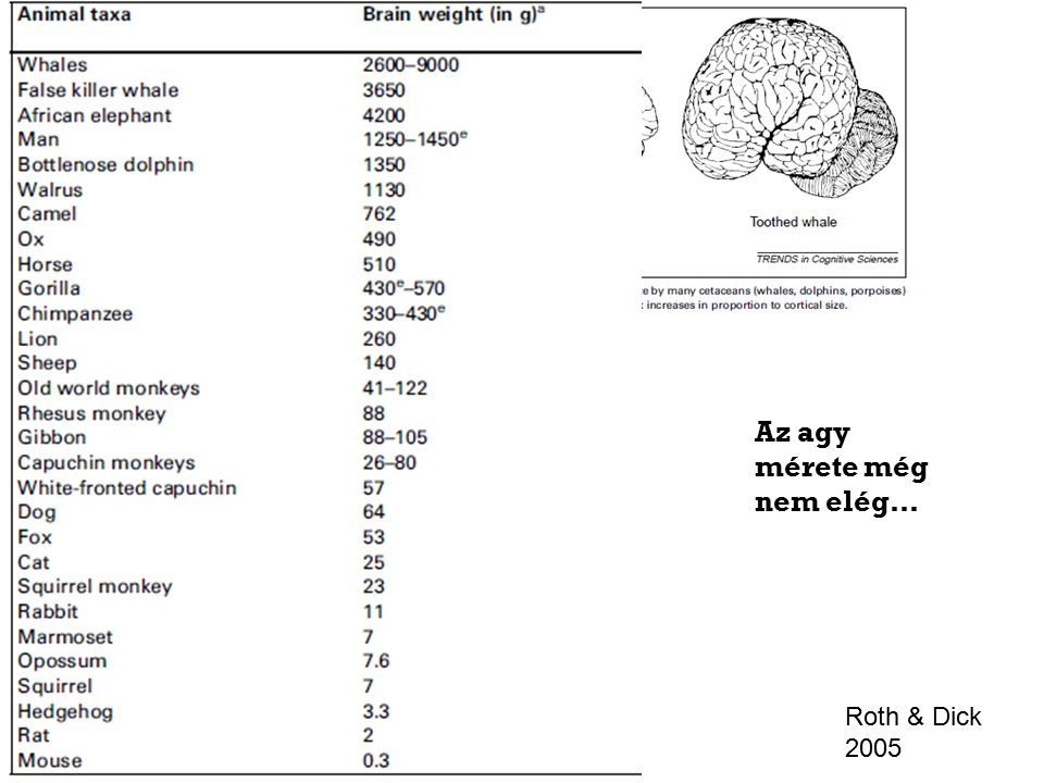 Roth & Dick 2005 Az agy mérete még nem elég…