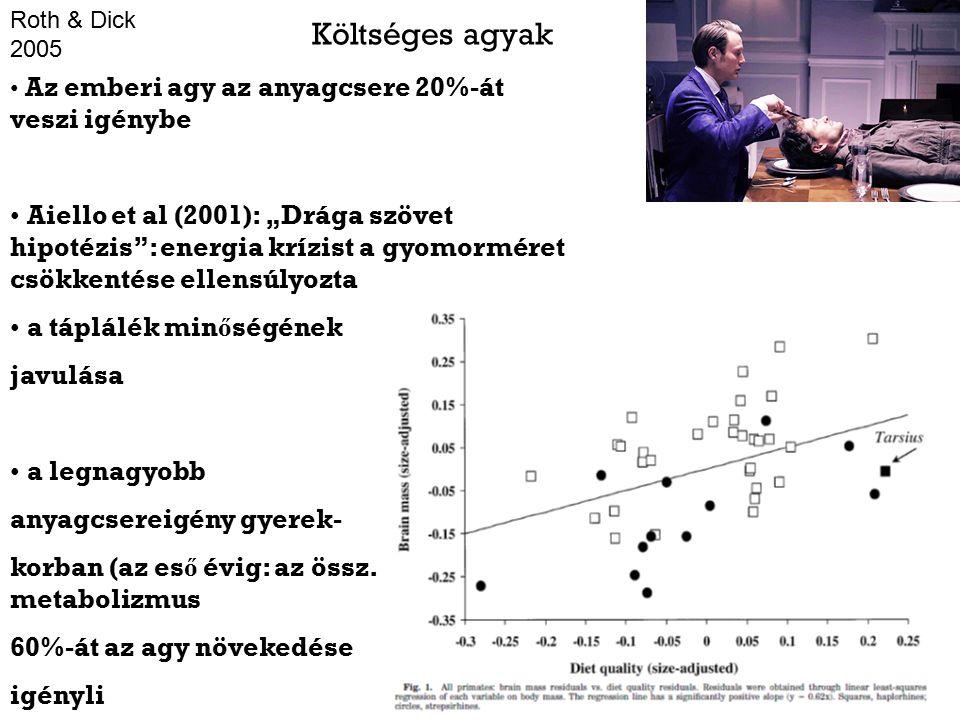 """Költséges agyak Az emberi agy az anyagcsere 20%-át veszi igénybe Aiello et al (2001): """"Drága szövet hipotézis : energia krízist a gyomorméret csökkentése ellensúlyozta a táplálék min ő ségének javulása a legnagyobb anyagcsereigény gyerek- korban (az es ő évig: az össz."""