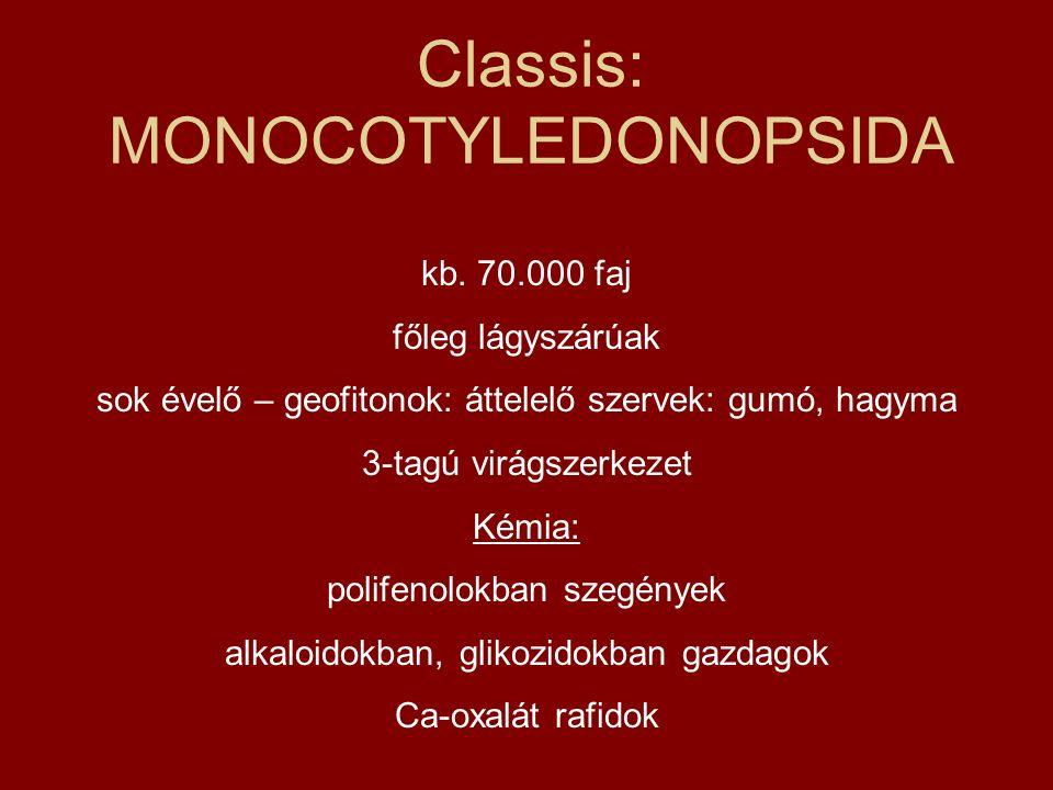 Classis: MONOCOTYLEDONOPSIDA kb. 70.000 faj főleg lágyszárúak sok évelő – geofitonok: áttelelő szervek: gumó, hagyma 3-tagú virágszerkezet Kémia: poli