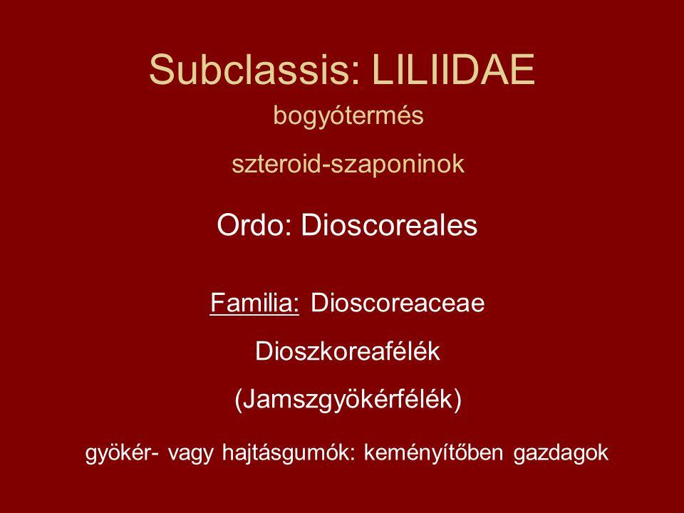 Subclassis: LILIIDAE Ordo: Dioscoreales Familia: Dioscoreaceae Dioszkoreafélék (Jamszgyökérfélék) bogyótermés szteroid-szaponinok gyökér- vagy hajtásg