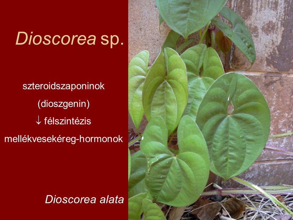 Dioscorea sp. Dioscorea alata szteroidszaponinok (dioszgenin)  félszintézis mellékvesekéreg-hormonok