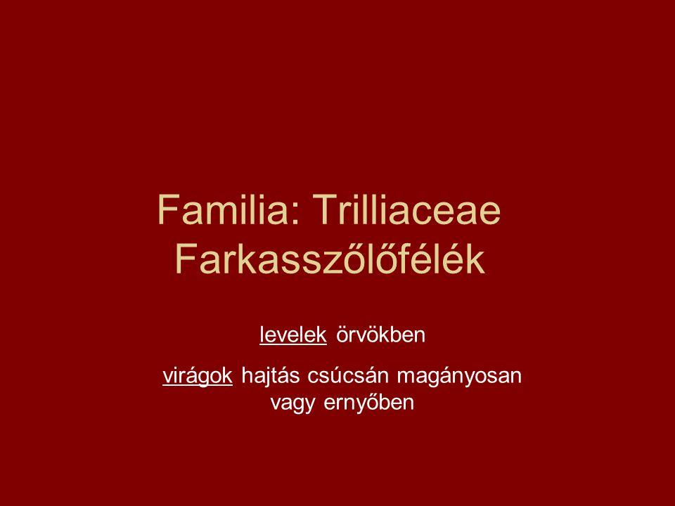 Familia: Trilliaceae Farkasszőlőfélék levelek örvökben virágok hajtás csúcsán magányosan vagy ernyőben