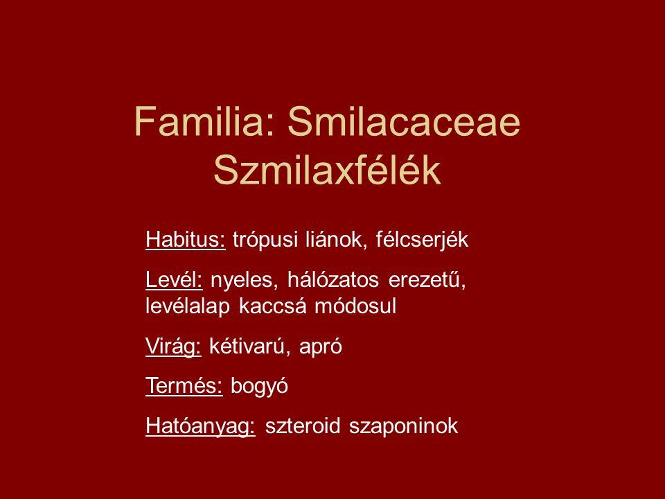 Familia: Smilacaceae Szmilaxfélék Habitus: trópusi liánok, félcserjék Levél: nyeles, hálózatos erezetű, levélalap kaccsá módosul Virág: kétivarú, apró