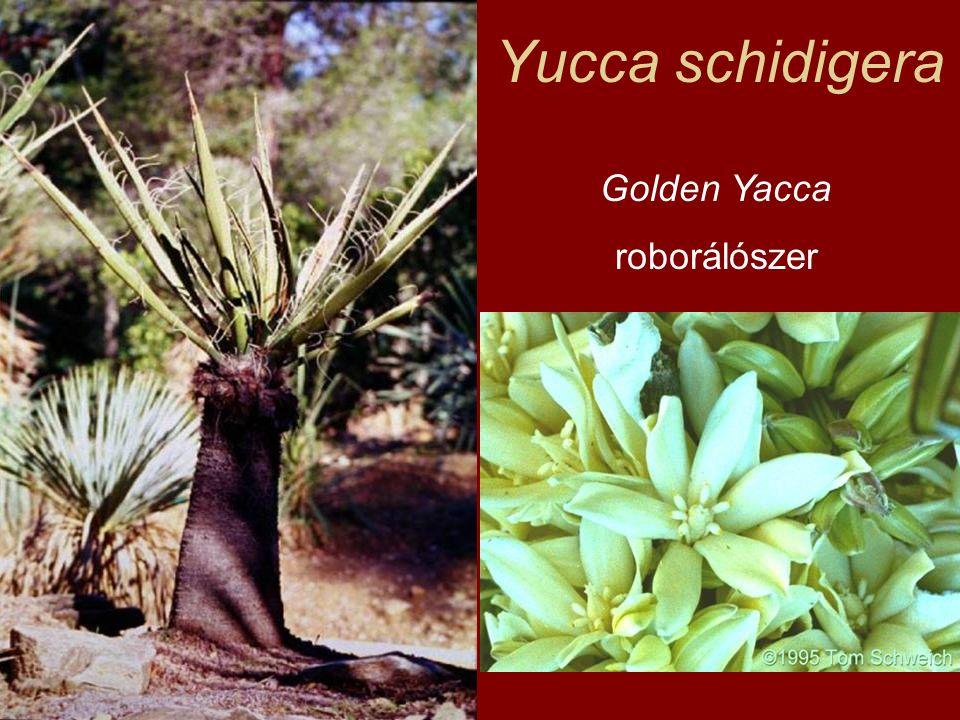 Yucca schidigera Golden Yacca roborálószer