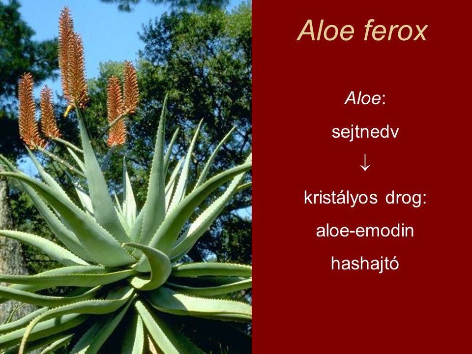 Aloe ferox Aloe: sejtnedv  kristályos drog: aloe-emodin hashajtó