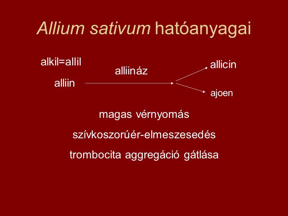 Allium sativum hatóanyagai alliin alliináz allicin magas vérnyomás szívkoszorúér-elmeszesedés trombocita aggregáció gátlása alkil=allil ajoen