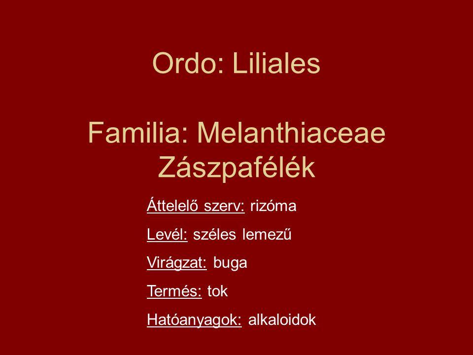 Ordo: Liliales Familia: Melanthiaceae Zászpafélék Áttelelő szerv: rizóma Levél: széles lemezű Virágzat: buga Termés: tok Hatóanyagok: alkaloidok