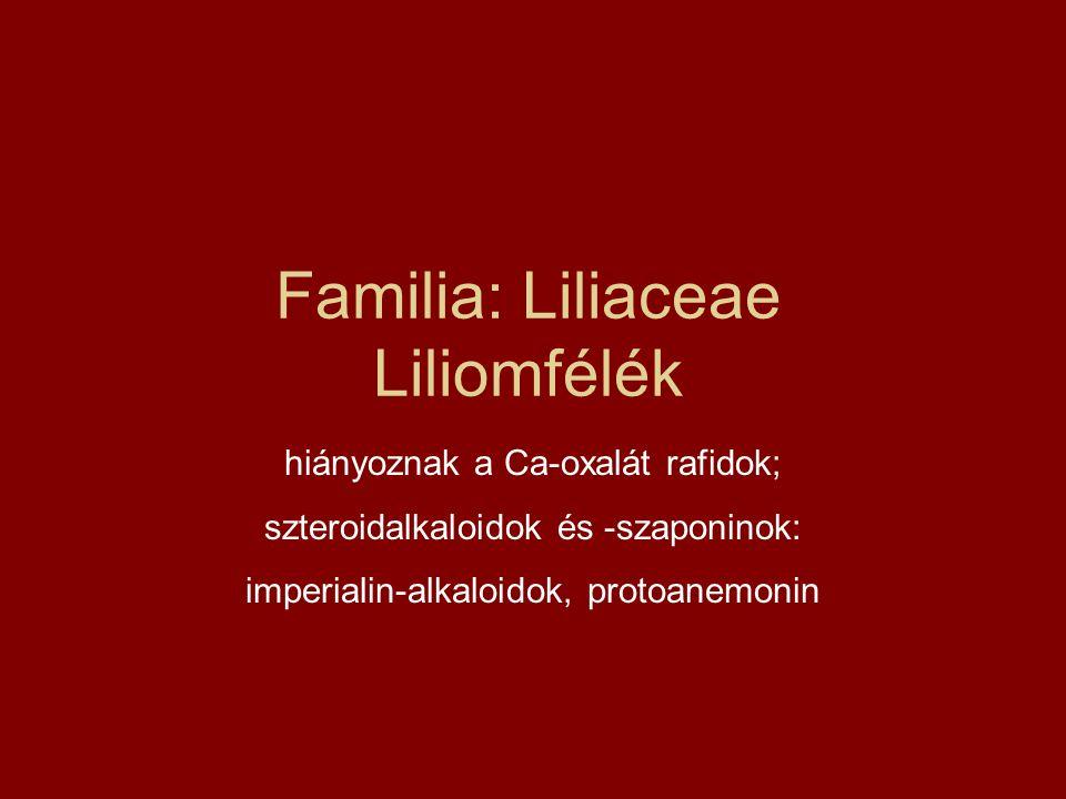 Familia: Liliaceae Liliomfélék hiányoznak a Ca-oxalát rafidok; szteroidalkaloidok és -szaponinok: imperialin-alkaloidok, protoanemonin