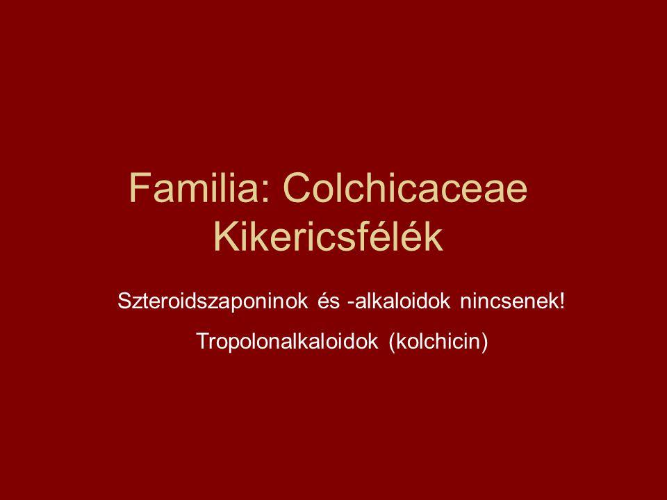 Familia: Colchicaceae Kikericsfélék Szteroidszaponinok és -alkaloidok nincsenek! Tropolonalkaloidok (kolchicin)