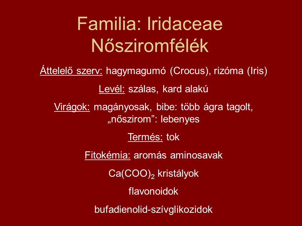 Familia: Iridaceae Nősziromfélék Áttelelő szerv: hagymagumó (Crocus), rizóma (Iris) Levél: szálas, kard alakú Virágok: magányosak, bibe: több ágra tag