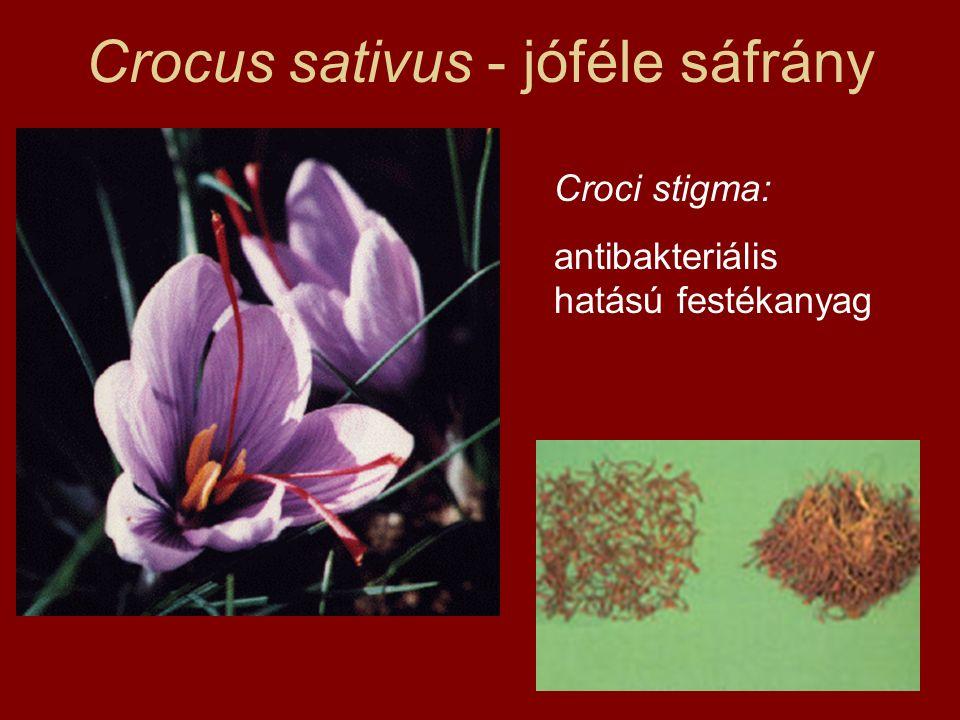 Crocus sativus - jóféle sáfrány Croci stigma: antibakteriális hatású festékanyag