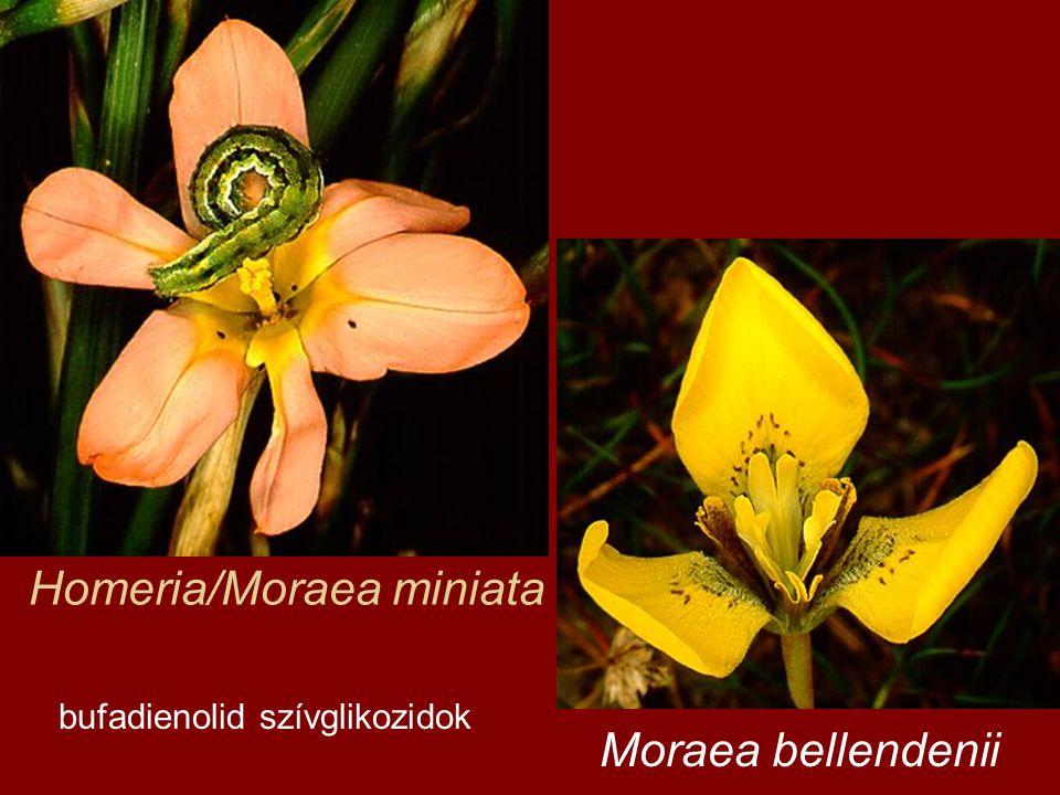 Homeria/Moraea miniata bufadienolid szívglikozidok Moraea bellendenii