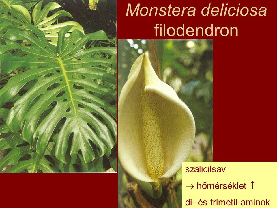Familia: Hyacinthaceae Jácintfélék Elterjedés: Dél-Afrika, Mediterráneum Habitus: hagymás évelők HA.: poliszacharid nyálka, bufadienolid-vázas szívglikozidok