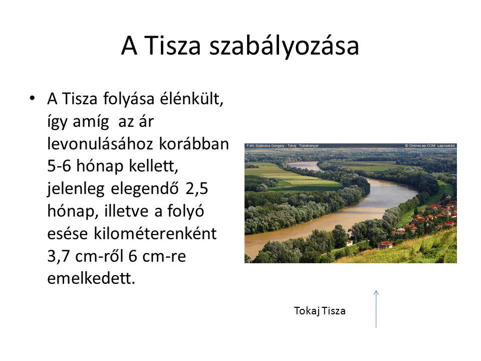 A Tisza szabályozása A Tisza folyása élénkült, így amíg az ár levonulásához korábban 5-6 hónap kellett, jelenleg elegendő 2,5 hónap, illetve a folyó esése kilométerenként 3,7 cm-ről 6 cm-re emelkedett.