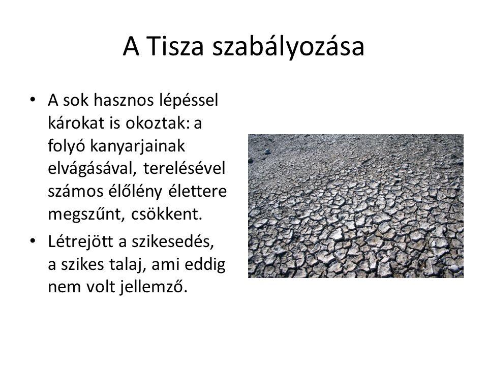 A Tisza szabályozása A sok hasznos lépéssel károkat is okoztak: a folyó kanyarjainak elvágásával, terelésével számos élőlény élettere megszűnt, csökkent.
