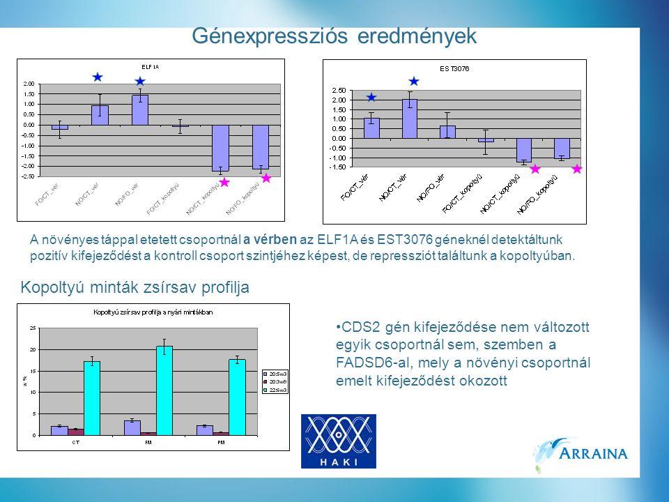 Génexpressziós eredmények A növényes táppal etetett csoportnál a vérben az ELF1A és EST3076 géneknél detektáltunk pozitív kifejeződést a kontroll csoport szintjéhez képest, de repressziót találtunk a kopoltyúban.