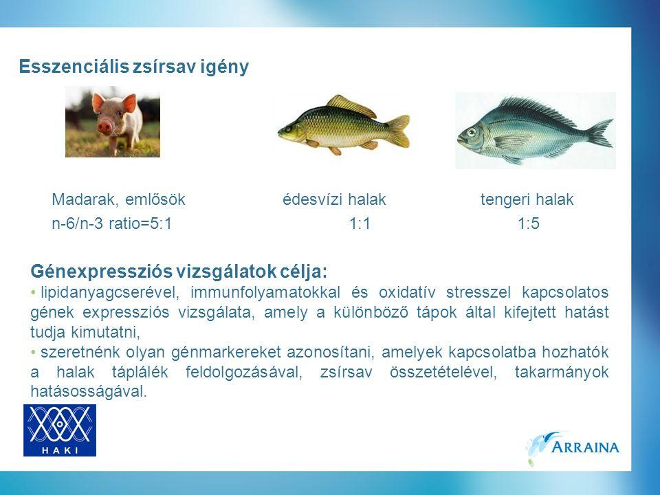 Esszenciális zsírsav igény Madarak, emlősökédesvízi halak tengeri halak n-6/n-3 ratio=5:11:1 1:5 Génexpressziós vizsgálatok célja: lipidanyagcserével, immunfolyamatokkal és oxidatív stresszel kapcsolatos gének expressziós vizsgálata, amely a különböző tápok által kifejtett hatást tudja kimutatni, szeretnénk olyan génmarkereket azonosítani, amelyek kapcsolatba hozhatók a halak táplálék feldolgozásával, zsírsav összetételével, takarmányok hatásosságával.