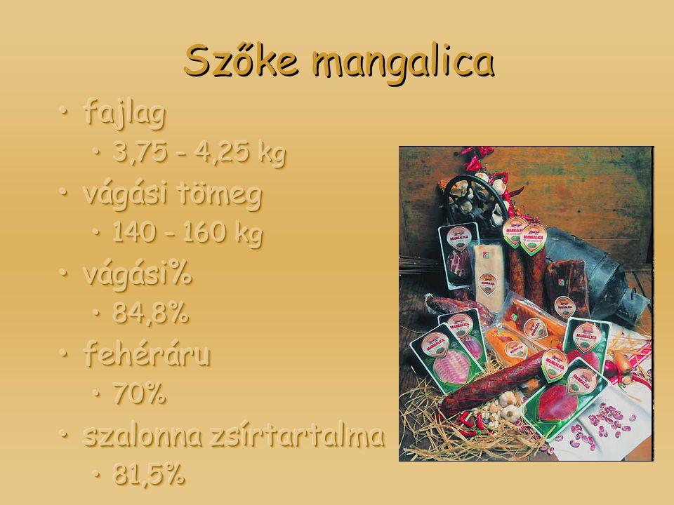 Szőke mangalica