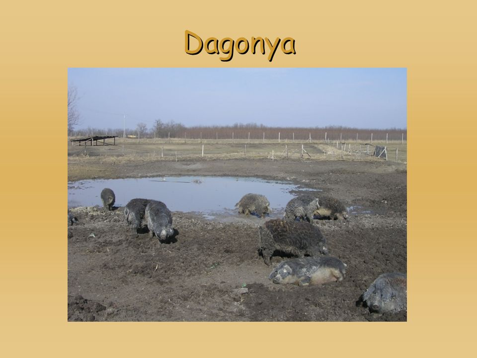Dagonya